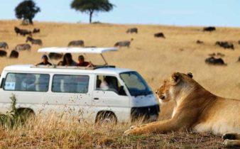 Voyager en Afrique